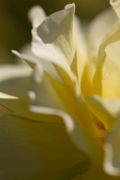 San-Jose-Rose-Gardens-20140720_0062
