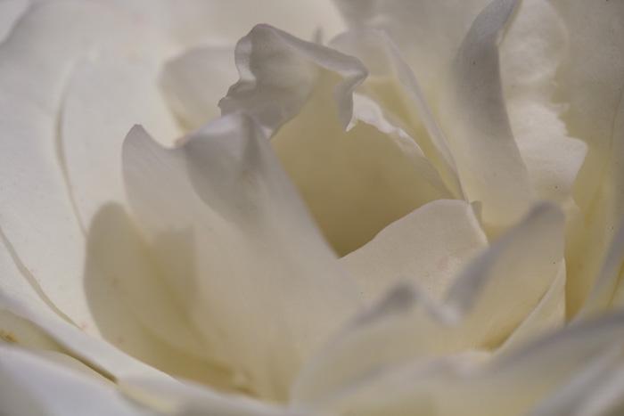 San-Jose-Rose-Gardens-20140720_127b