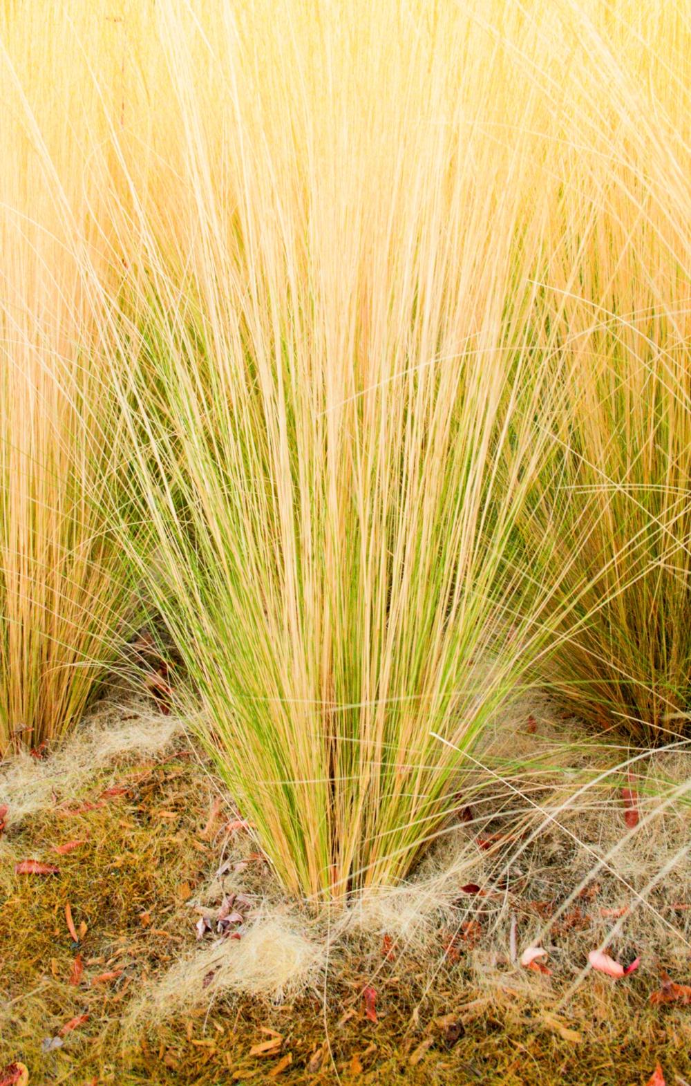 grass-i-1