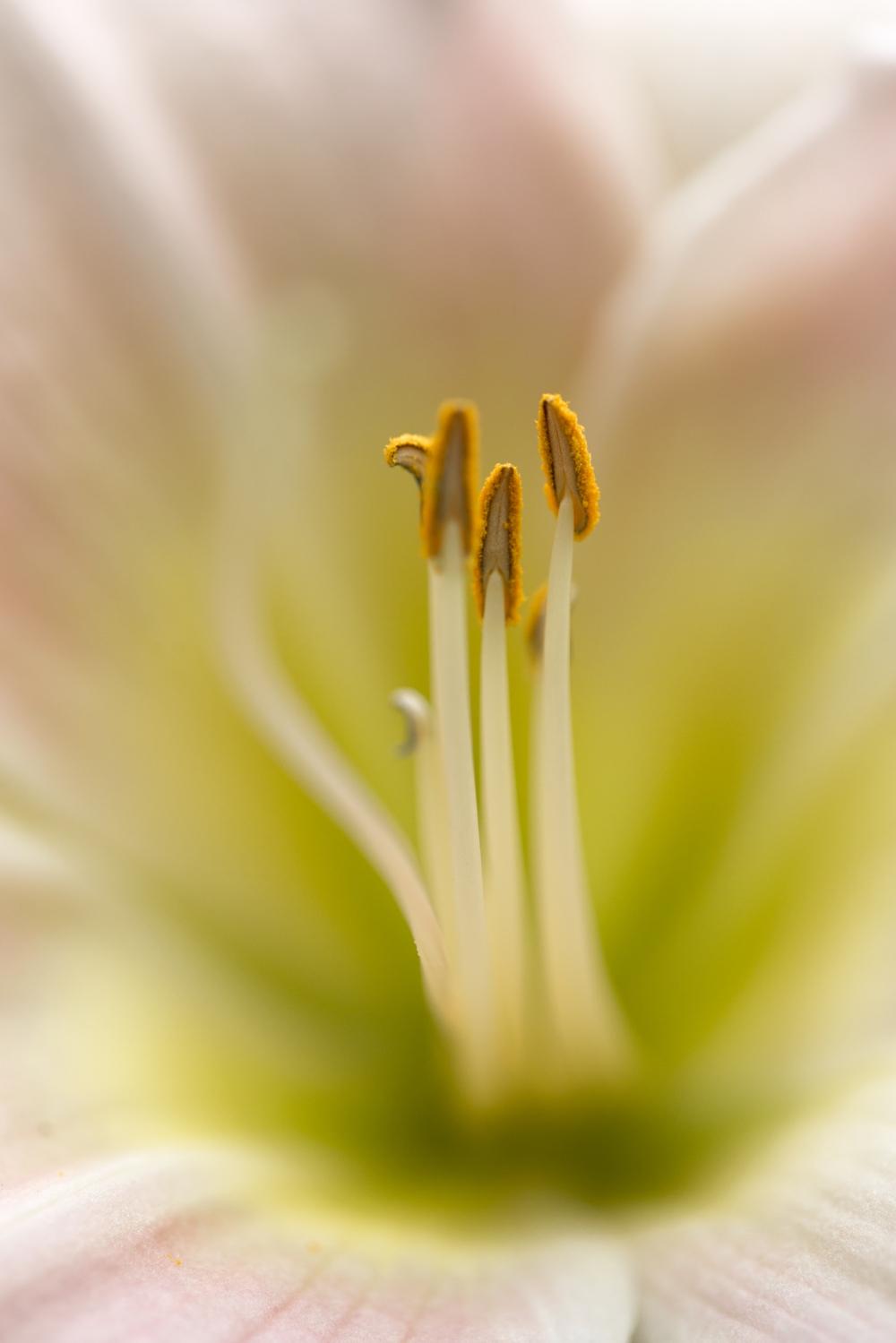 flower-2014-1